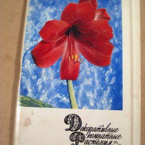 компания набор открыток декоративные комнатные растения потому